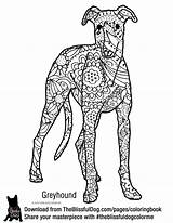 Greyhound Coloring Printable Pip Italian Colouring Woezel Kleurplaten Adult Sheet Template Whippet Books Breeds Sheets Drawing Below sketch template
