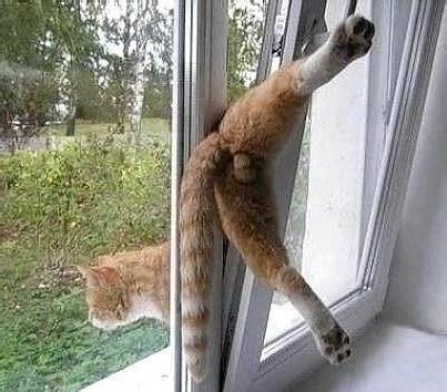 fenster katzensicher machen warum ist es so wichtig fenster und balkone katzensicher zu machen streunerhilfe ni no e v