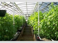 BuildingBuying a Greenhouse
