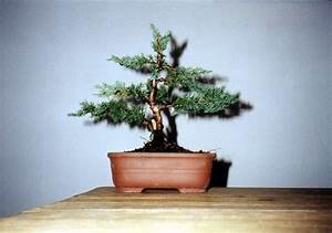 Ficus Bonsai Schneiden : harald theuner 39 s bonsais ~ Indierocktalk.com Haus und Dekorationen