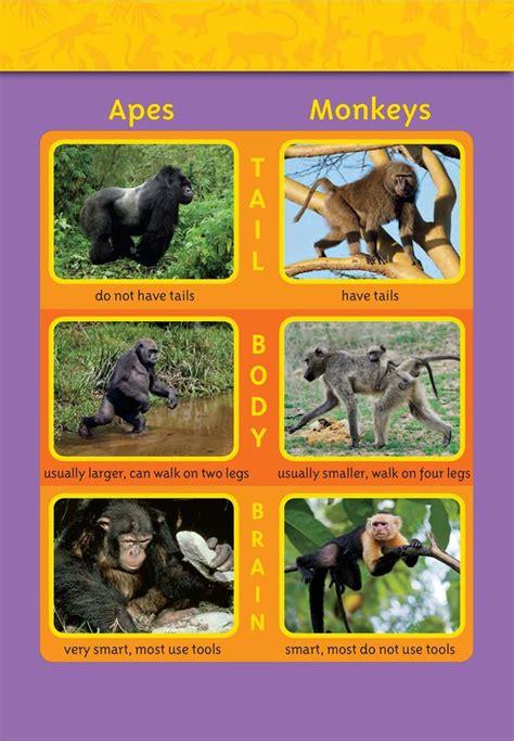 apes  monkeys national geographic society