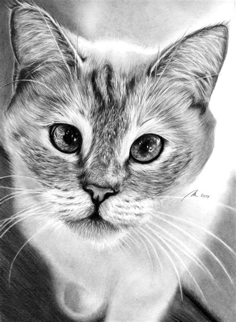 30 Beautiful Cat Drawings  Best Color Pencil Drawings And