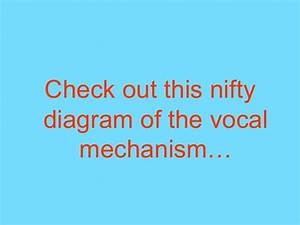 The Vocal Mechanism