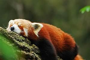 Cute!: Wednesday Naptime!