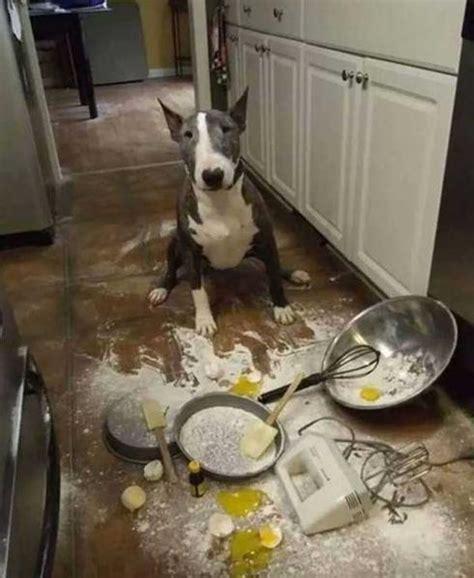 chien cuisiné 15 signes que tu es un peu trop accro aux chiens