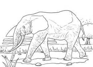 african forest elephant coloring page supercoloringcom