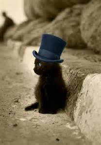 tiny hats on cats tiny cats in tiny hats boys like to pin