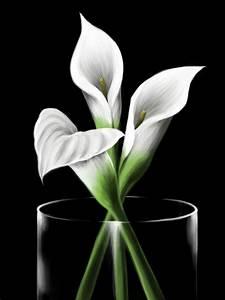 Calla Lilies by Elokoin on DeviantArt