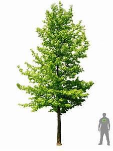 Amberbaum Oktoberglut Preis : amerikanischer amberbaum architektur layout s ~ Michelbontemps.com Haus und Dekorationen