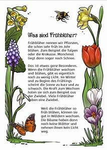 Aufbau Der Zwiebel : worksheet crafter ~ Lizthompson.info Haus und Dekorationen
