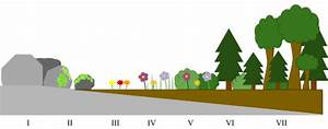 The Differences Between Primary  U0026 Secondary Succession
