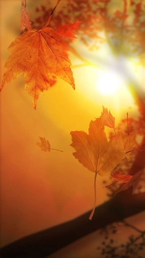 Wallpaper Iphone Fall Background by Free Fall Iphone Hd Wallpapers Pixelstalk Net