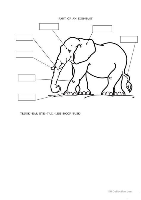 parts   elephant worksheet  esl printable