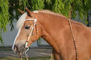 Kostenloses Foto: Haflinger, Trense, Pferd - Kostenloses