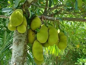 Opinions on Jackfruit