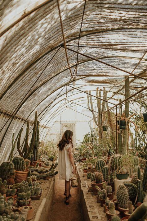 Cactus Aesthetic 10 Decoratoo