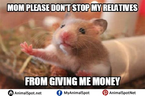 Hamster Meme - hamster memes