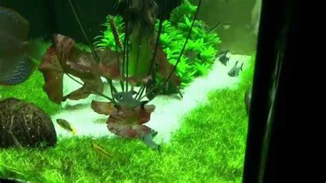 Juwel Lido 200 Discus Aquascape Youtube