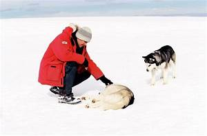 180 Best Images About Eight Below On Pinterest Theater