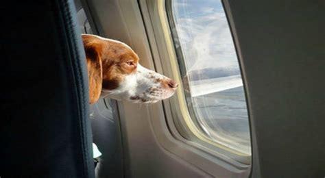 cani in cabina aereo delta air line dice stop ai cani in stiva potranno