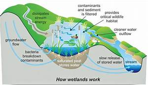 Wetlands Are Magicians Of Water Quality Improvement