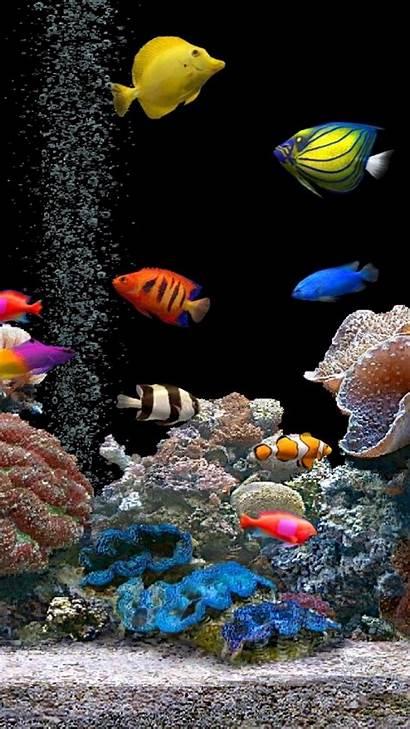 Fish Tank 3d Elegant Iphone