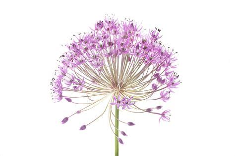 caprizzio bloem exhibitions haze a summer group exhibition page bond