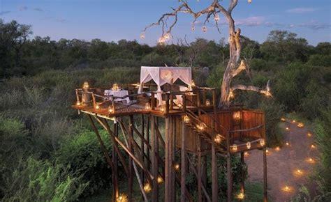 dream tree house honeymoons