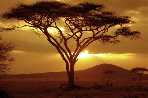 Serengeti Migration Pictures And Facts Tanzania