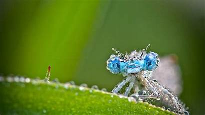 Biology Macro Insect Insects Pixelstalk Animals