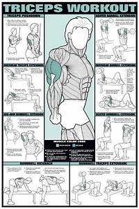 Anatomy Chart Triceps Workout
