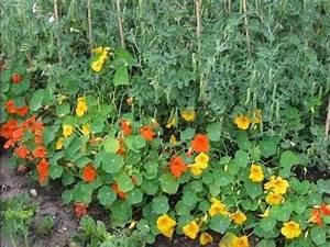 Mischkultur Im Garten : garten seminar mischkulturen im gemuesegarten f r ihren ~ Watch28wear.com Haus und Dekorationen