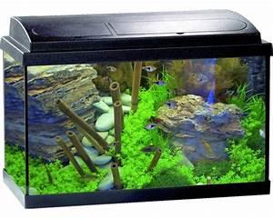 Komplett Aquarium Kaufen : aquarium eheim aquapro 60 plus mit beleuchtung heizer filter thermometer fangnetz futter ~ Eleganceandgraceweddings.com Haus und Dekorationen