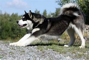 Strongest Dog In The World | Male Models Picture