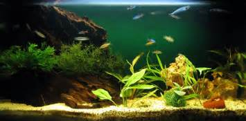 design aquarien need help selecting fish for an aquarium sle ornamental freshwater aquarium set ups