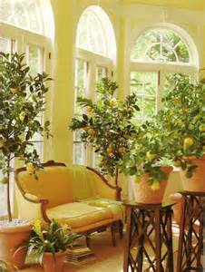 Indoor Citrus Trees