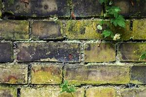 Moos Auf Gartenplatten Entfernen : moos auf steinplatten entfernen anleitung ~ Michelbontemps.com Haus und Dekorationen