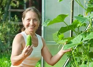 Gurken Anbauen Im Topf : gurkenpflanzen auf dem balkon so gibt 39 s reichlich ernte ~ Frokenaadalensverden.com Haus und Dekorationen