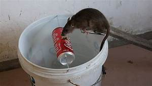 Best Mouse    Rat Trap Ever  How To Make Bucket Mouse Trap