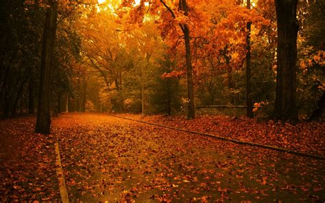 Autumn Wallpapers For Mac by 1440x900 Autumn Desktop Pc And Mac Wallpaper