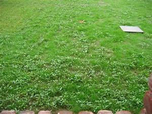 Traitement Mauvaise Herbe : pelouse gazon pr paration techniques co t semences 269 messages page 11 ~ Melissatoandfro.com Idées de Décoration