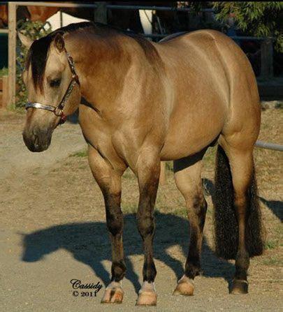 Wild Mustang Stallion Horse