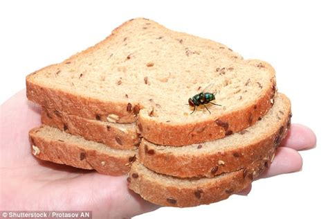 What It Really Means When A Fly Lands On Your Food Daily