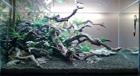 Wood For Aquascaping by Wood Rock A Story Aquascaping World Forum