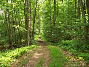 Fire Tower Trail, Allegany State Park, NY | The world God ...