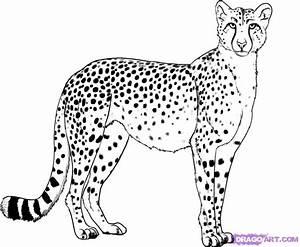 How To Draw A Cheetah  Step By Step  Safari Animals