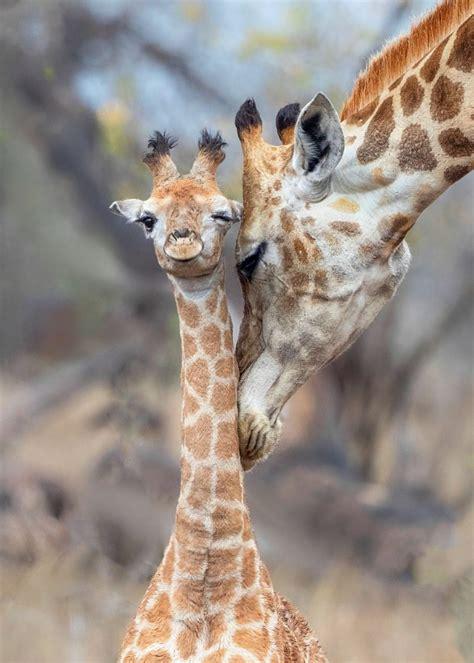 youre   tall   hug adorable moment baby