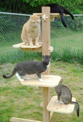 eco friendly cat tree foter