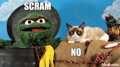 Grumpy Cat  Muppet Wiki Wikia