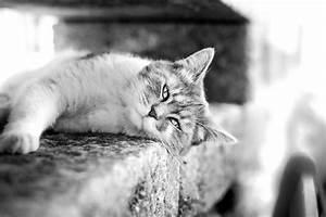 Schwarz Weiß Bilder Tiere : kostenlose bild katze schwarz wei katze katze tier k tzchen pelz haustier haushalt kitty ~ Markanthonyermac.com Haus und Dekorationen
